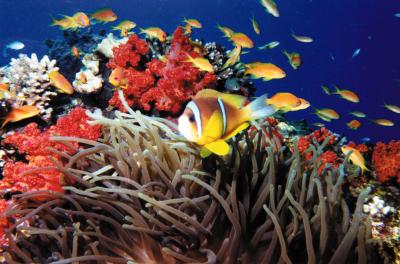 Aqaba+Underwater+2